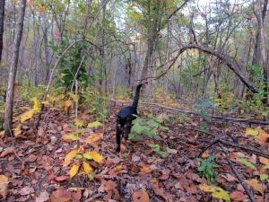 In the woods, October 2013